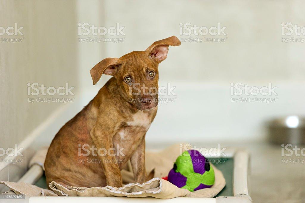 Shelter Dog stock photo