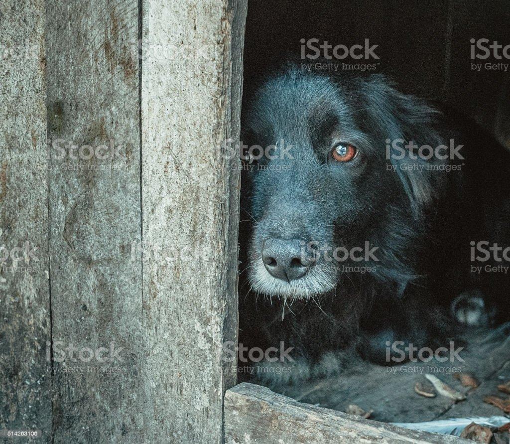 Shelter for animals. Miserable dog waiting for its master stock photo