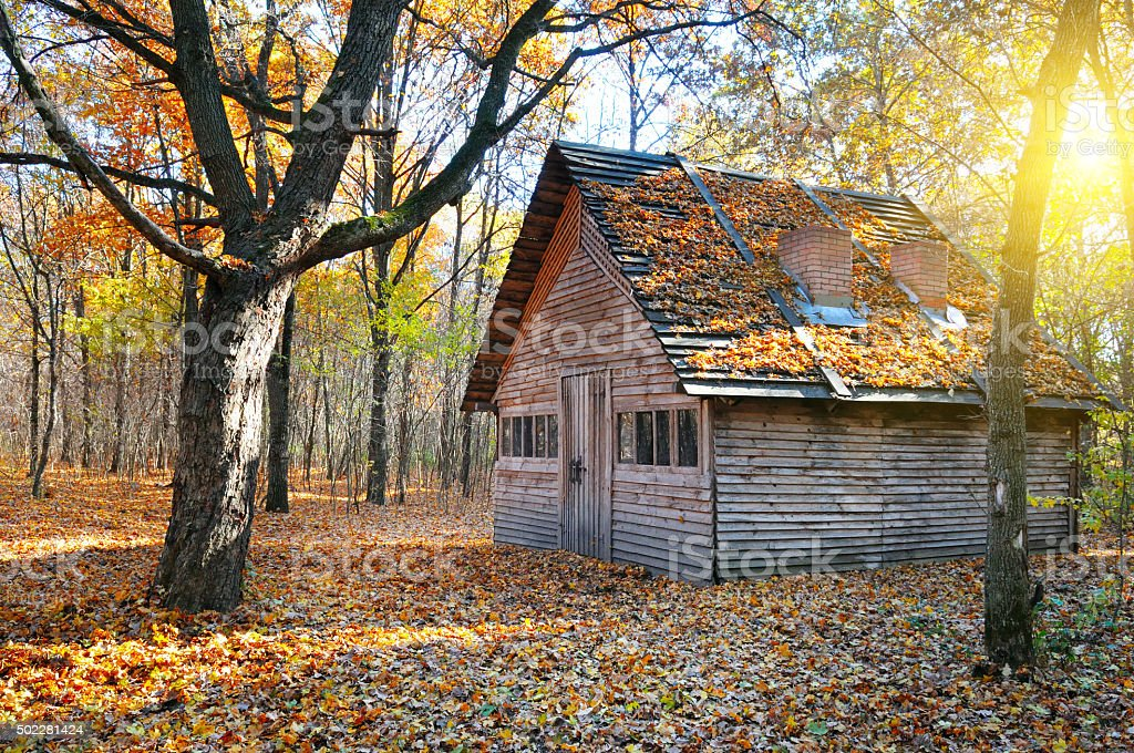 shelter in the autumn forest stock photo