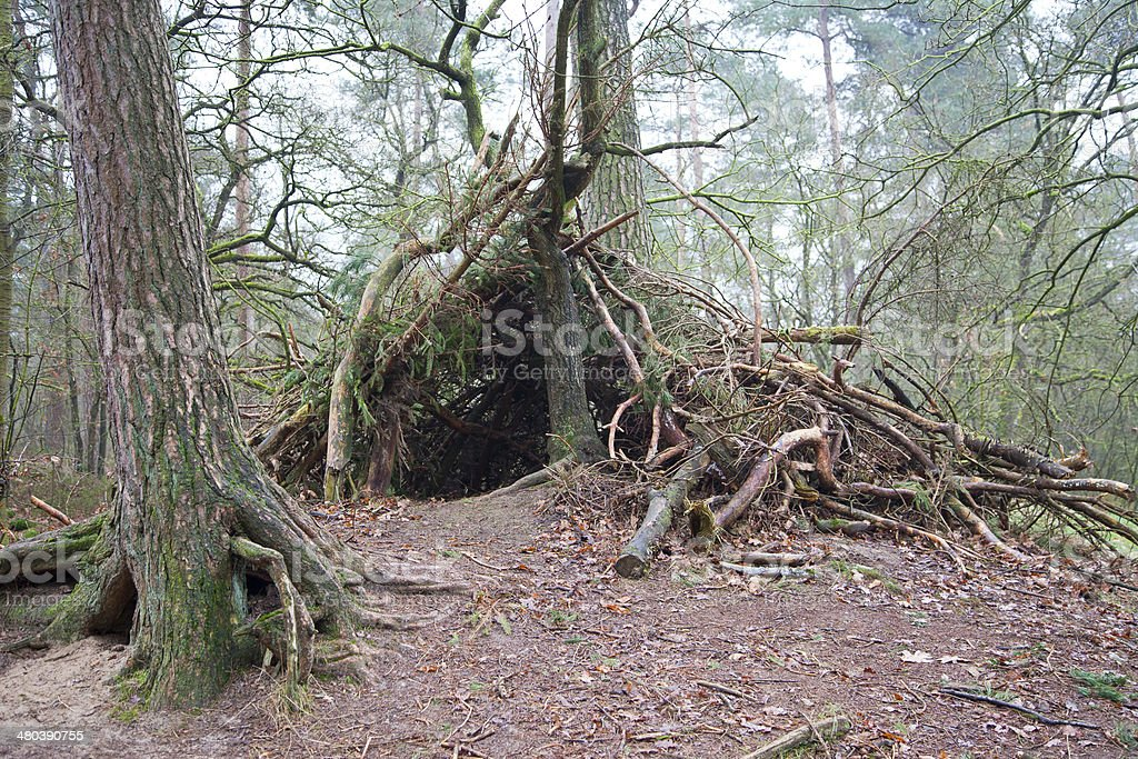 Shelter made of wood in forest stock photo