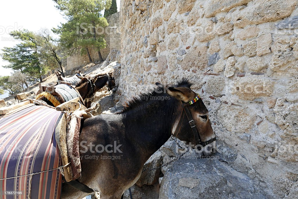 Sheltering donkey's, Lindos, Rhodes royalty-free stock photo