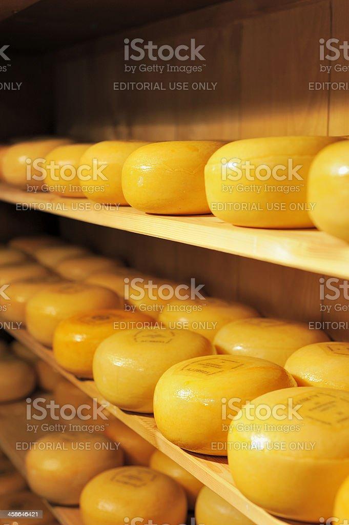 Shelves of Dutch Gouda Cheese royalty-free stock photo