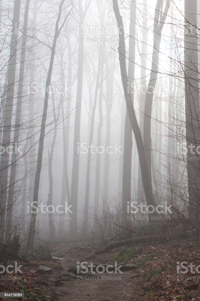 Shenandoah Fog stock photo