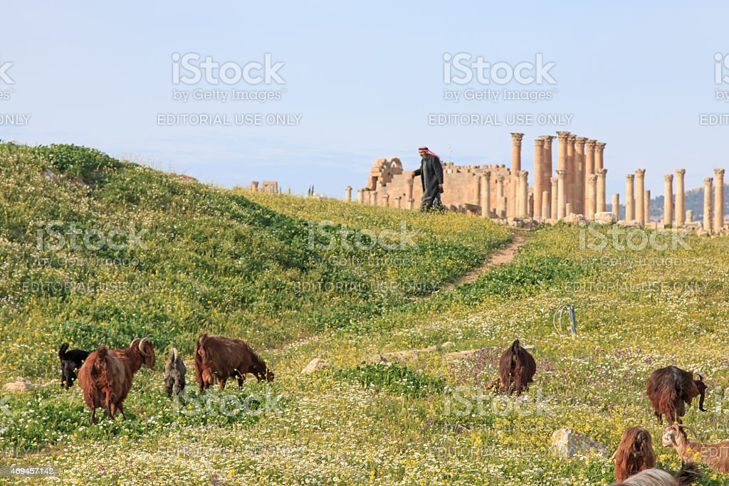 Sheperd walking among the ruins of the ancient Jerash stock photo