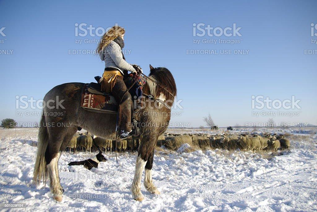 Sheperd with herd stock photo