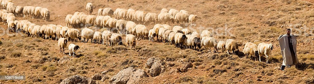 Shepherd and flock of sheeps in panoramic composition stock photo