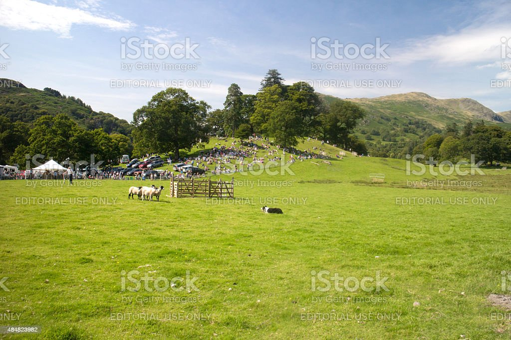 Shepherd and his Collie in a Sheepdog trial stock photo