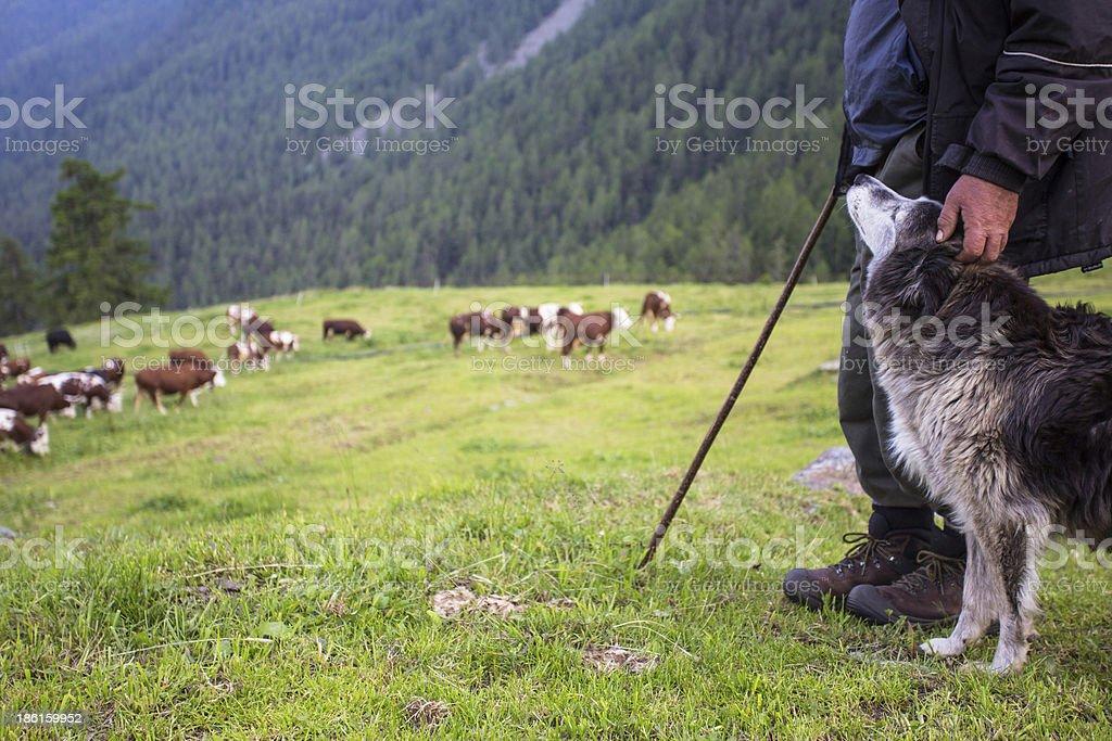 Shepherd and his dog stock photo