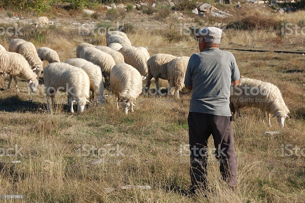 Shepherd and his flock stock photo