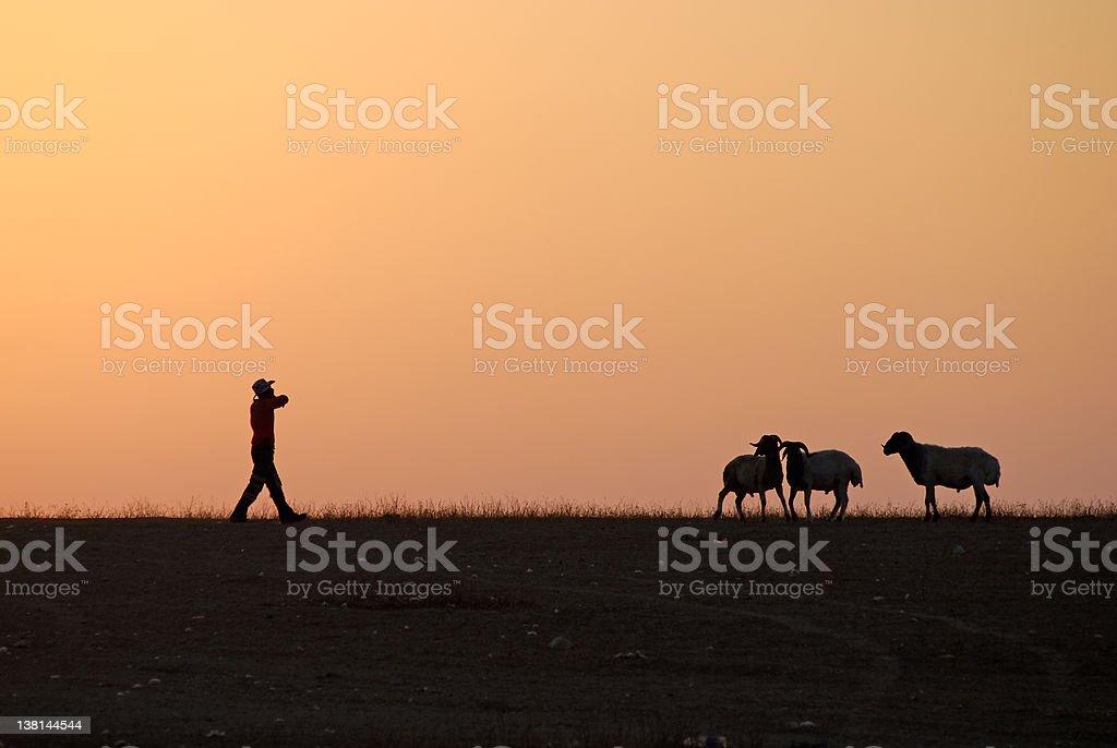 shepherd at sunset stock photo
