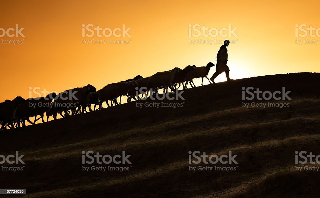 Shepherd leading his goats and sheep at sunset time stock photo