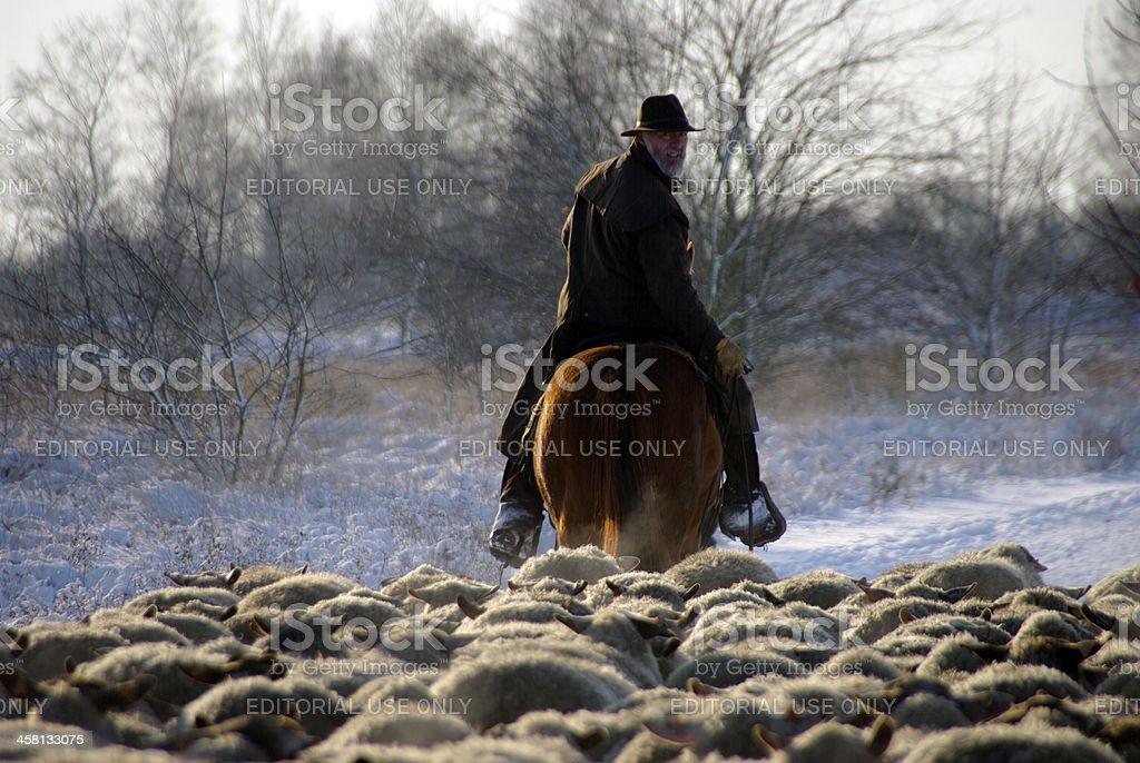 Shepherd leading his sheep stock photo