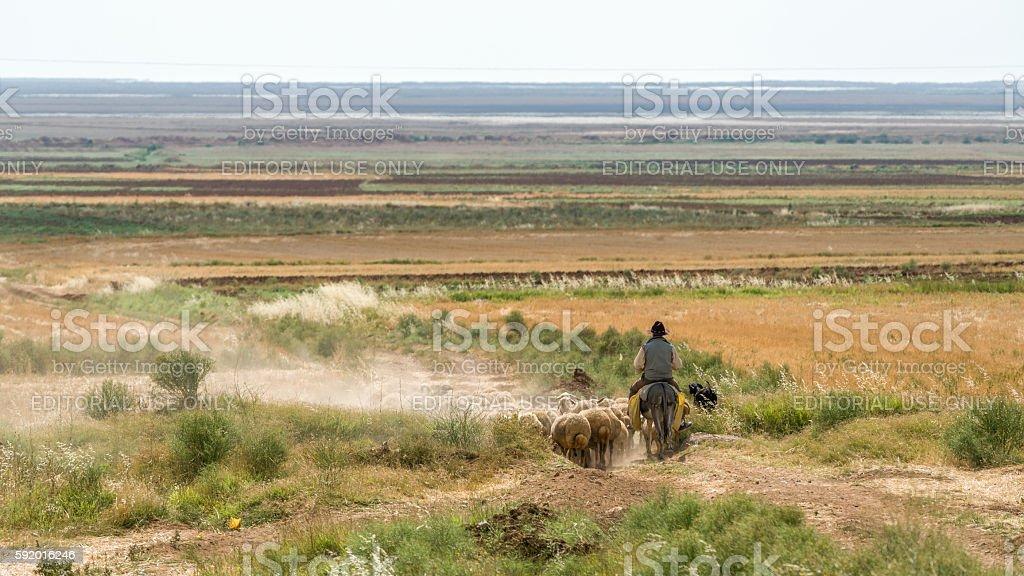 shepherd on donkey stock photo