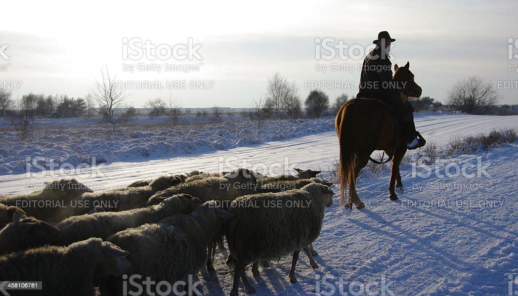 Shepherd on horse leading his sheep stock photo