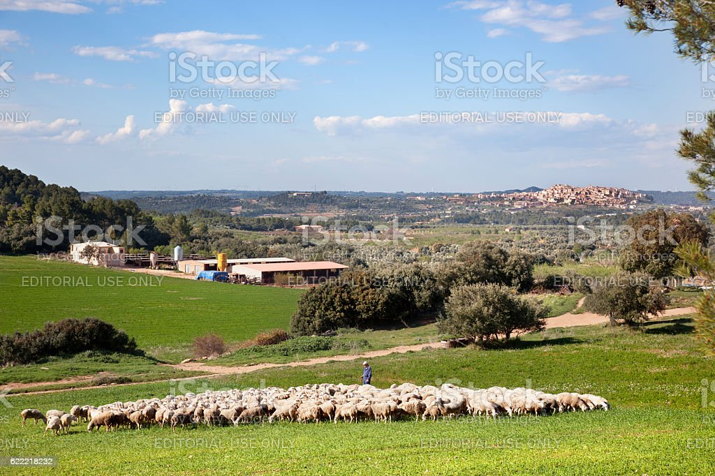 shepherd stock photo
