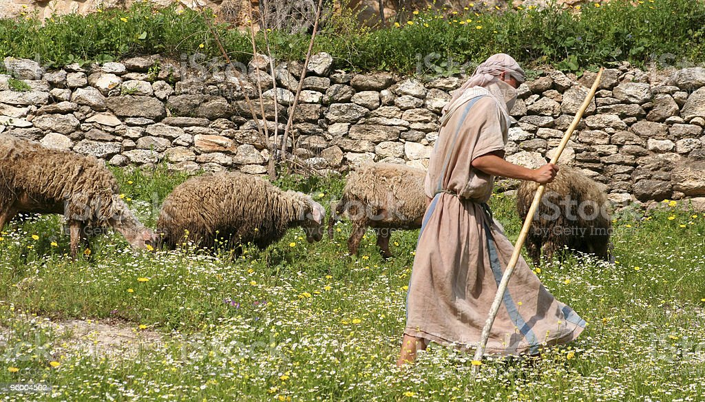 Shepherd walking with herd of sheep along stone wall stock photo