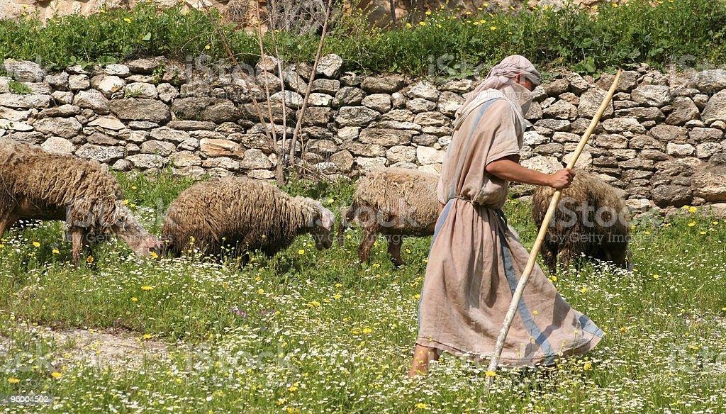 Shepherd walking with herd of sheep along stone wall stock photo