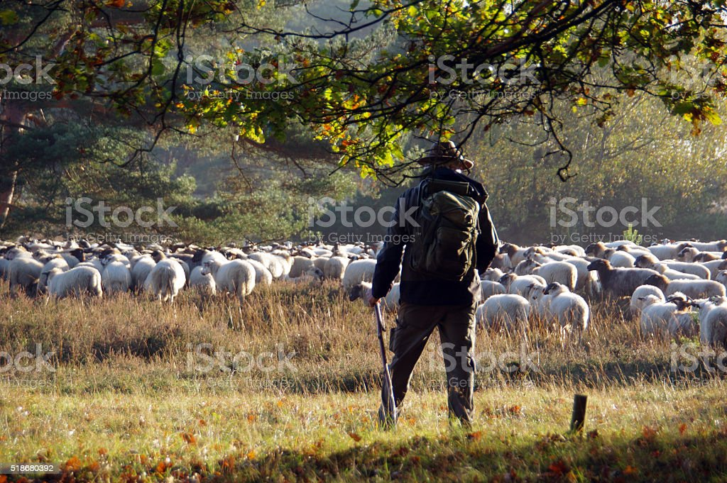 Shepherd watching his herd stock photo
