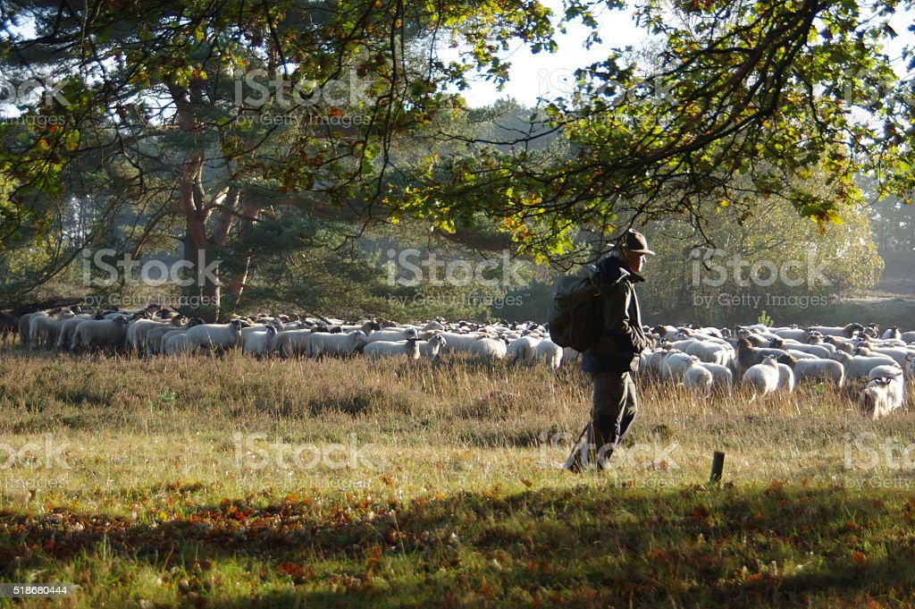 Shepherd with his herd stock photo