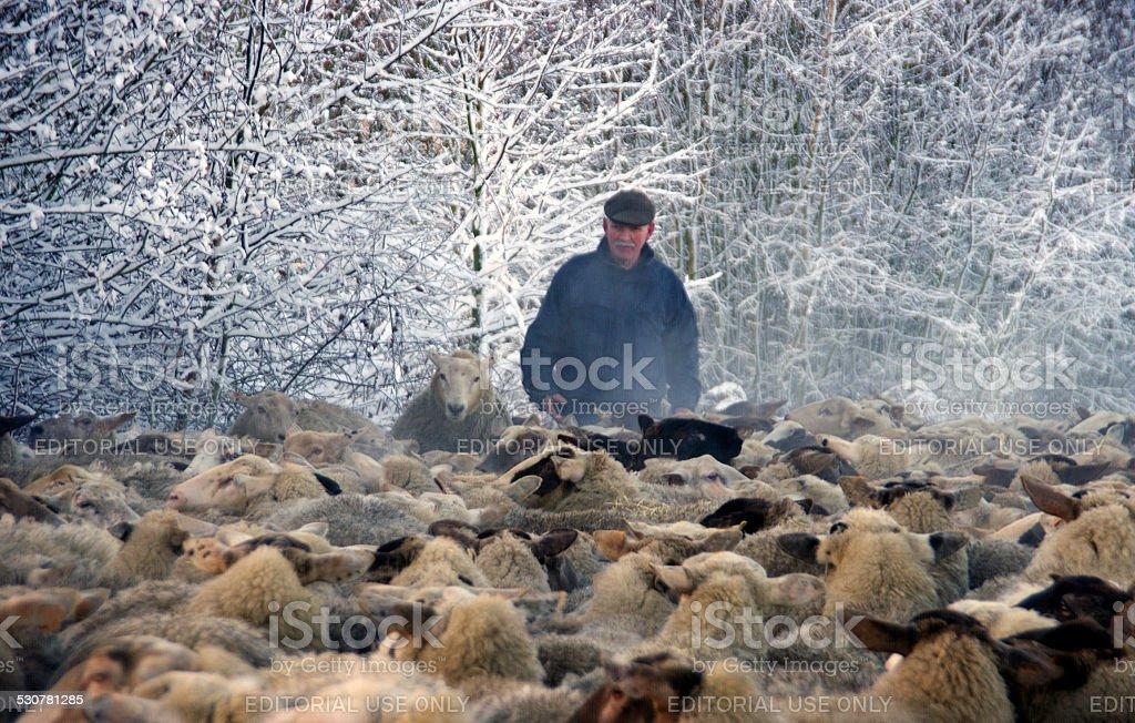 Shepherd with his herd stock photo