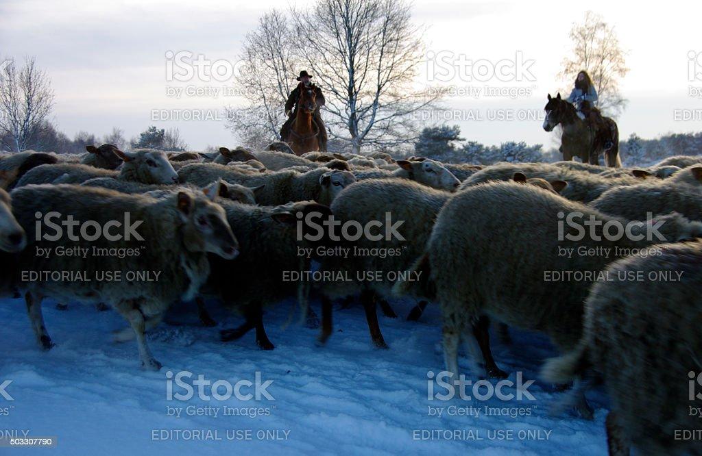 Shepherds leading there herd stock photo
