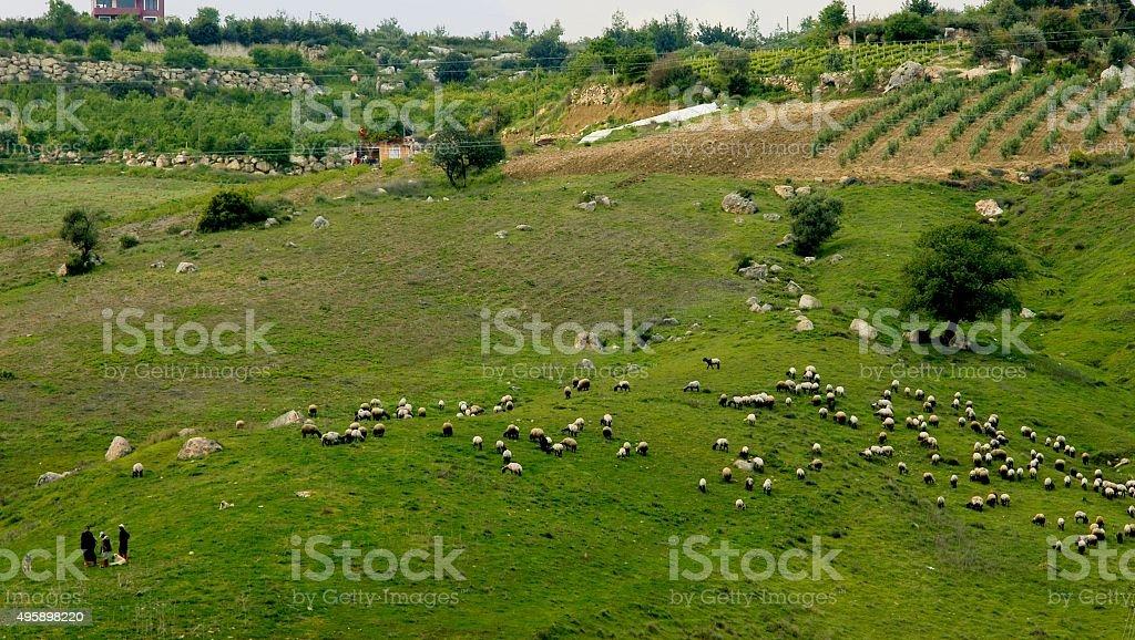 Shepherds royalty-free stock photo
