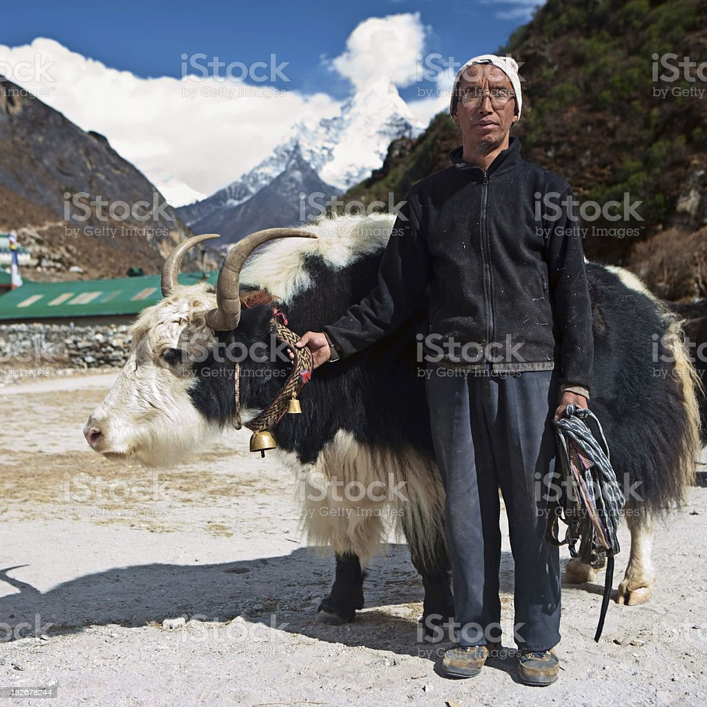 Sherpa with yak in Himalayan village, Sagarmatha National Park royalty-free stock photo