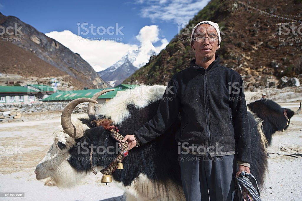 Sherpa with yak in Himalayan village, Sagarmatha National Park stock photo