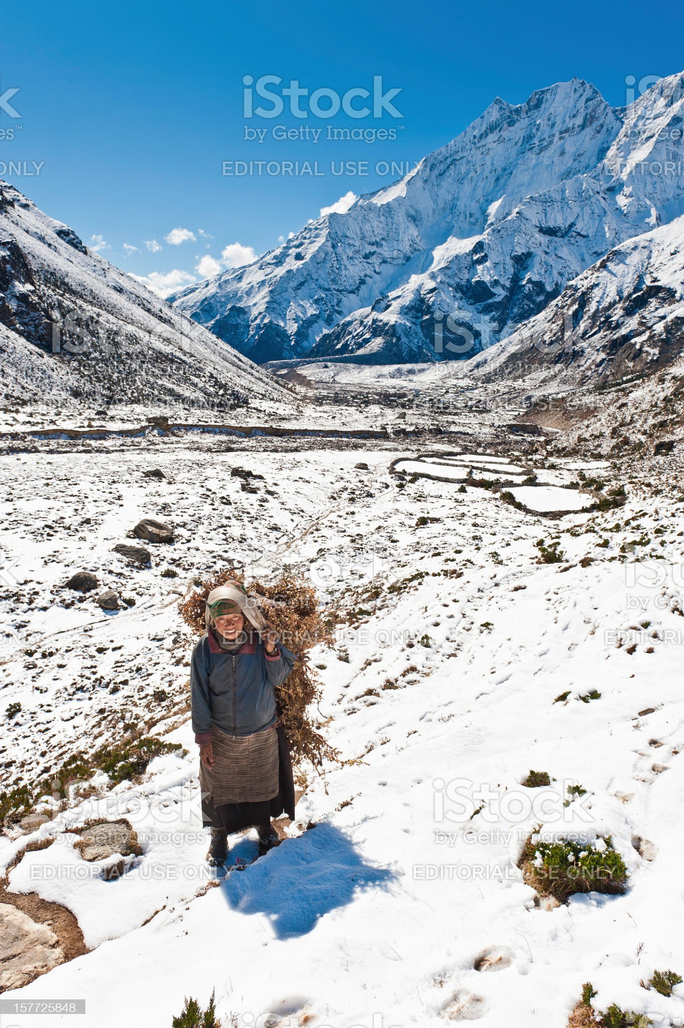 Sherpa woman carrying yak fodder snowy mountain valley royalty-free stock photo