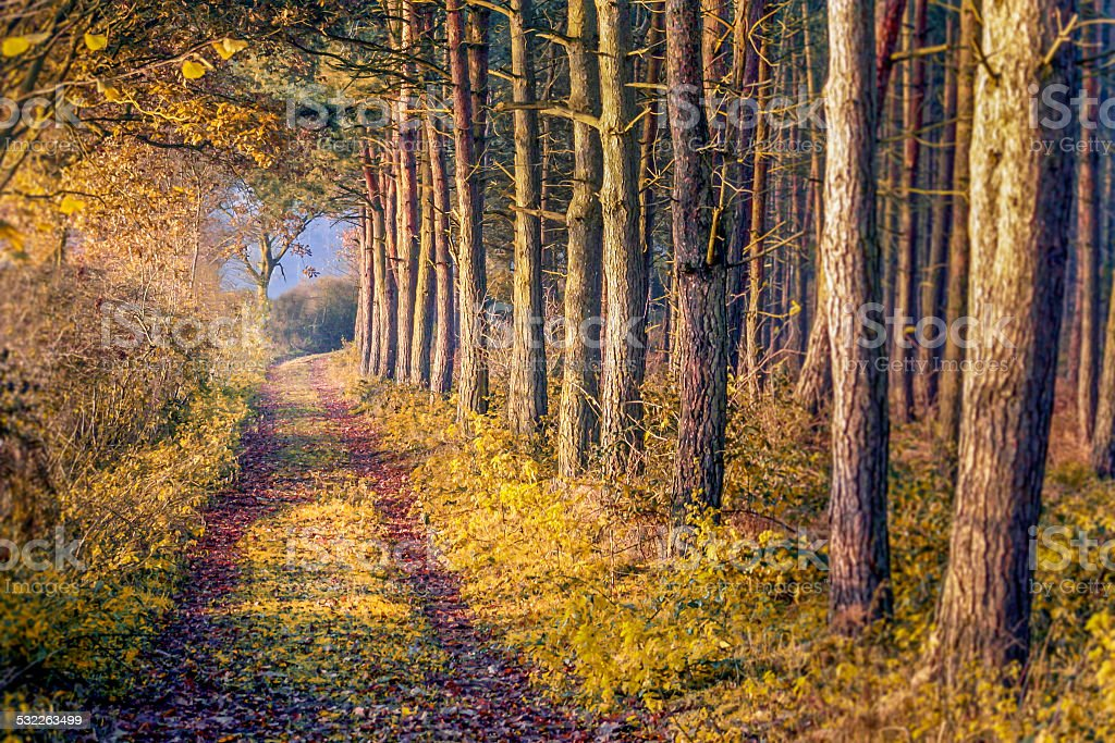 Sherwood Forest stock photo