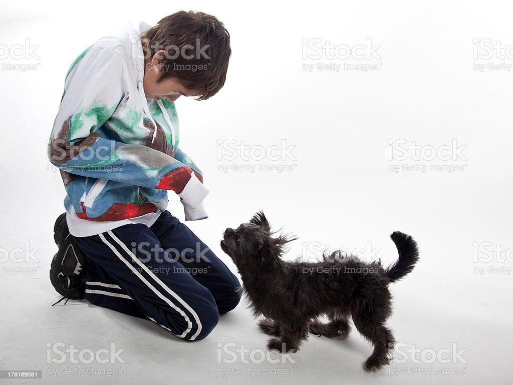 Shih Tsu playing with boy stock photo