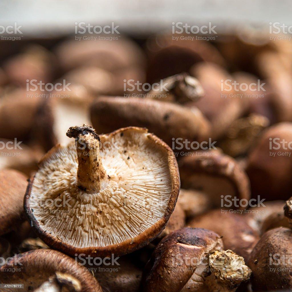 Shiitake Mushroom, an Edible Fungus Vegetable Food of Asian Culture stock photo
