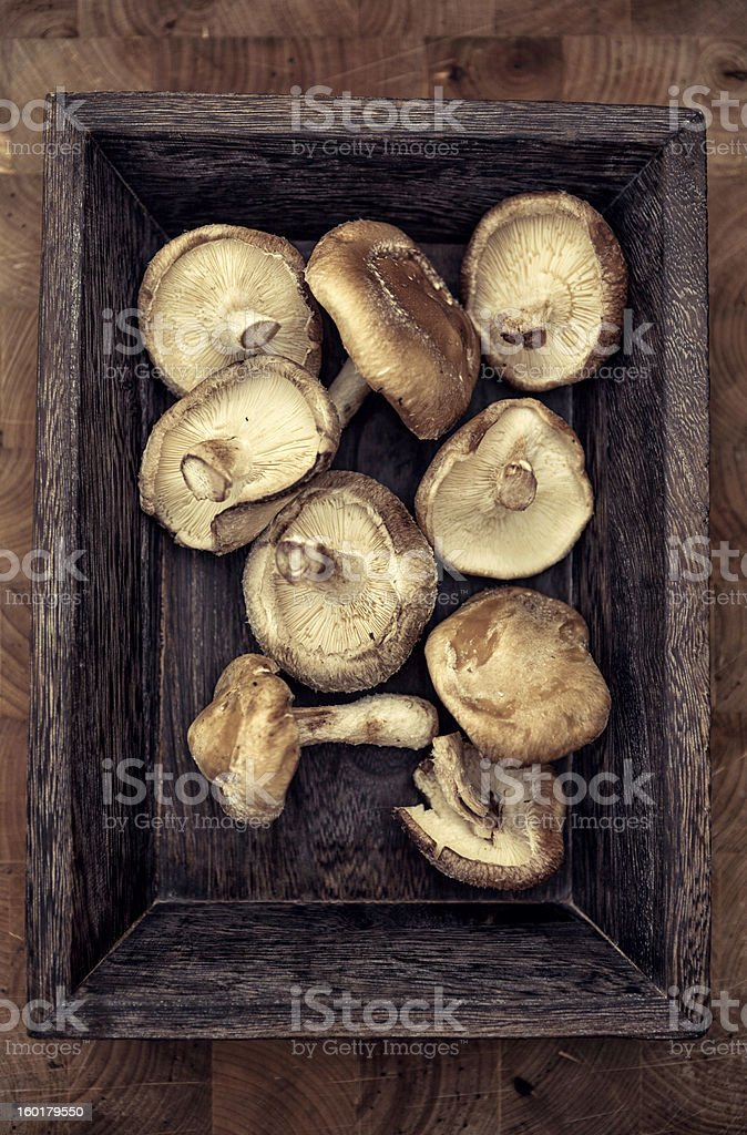 Shiitake Mushroom royalty-free stock photo