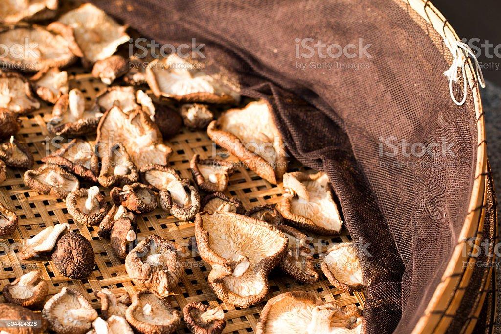 Shiitake Mushrooms Drying stock photo