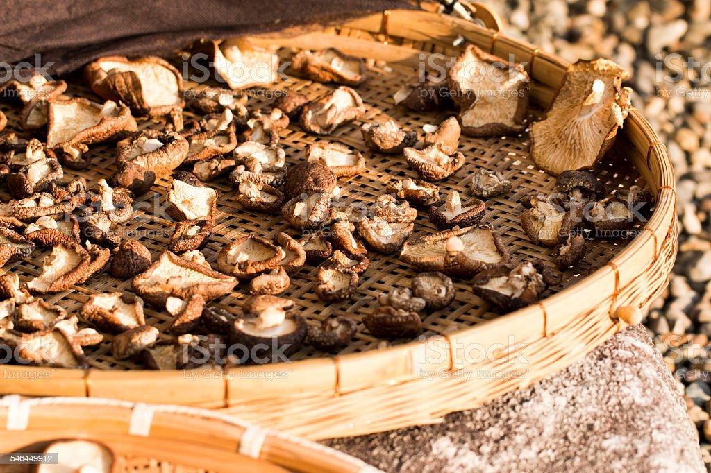 Shiitake Mushrooms stock photo