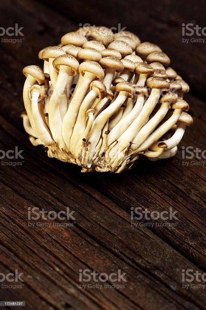 Shimeji Mushroom royalty-free stock photo