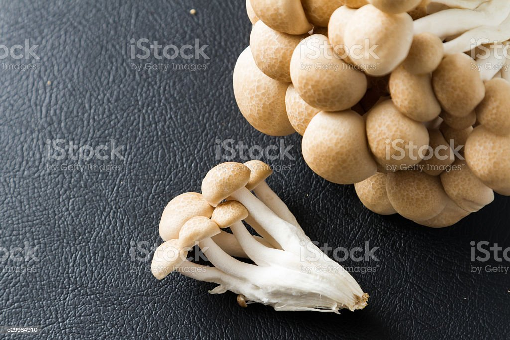 shimeji mushrooms brown varieties stock photo