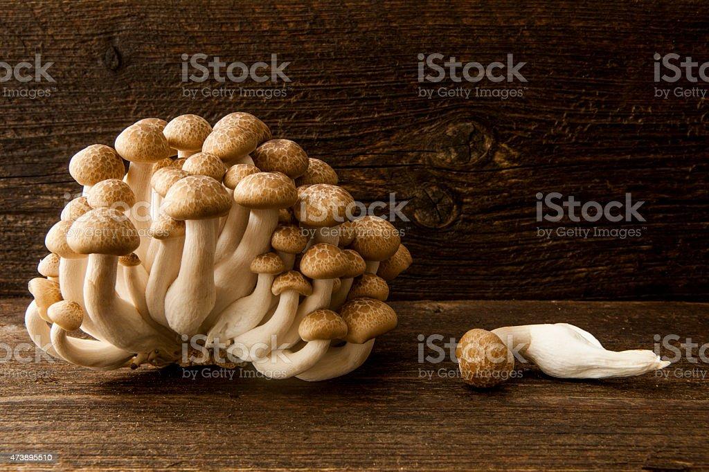 Shimeji mushrooms stock photo