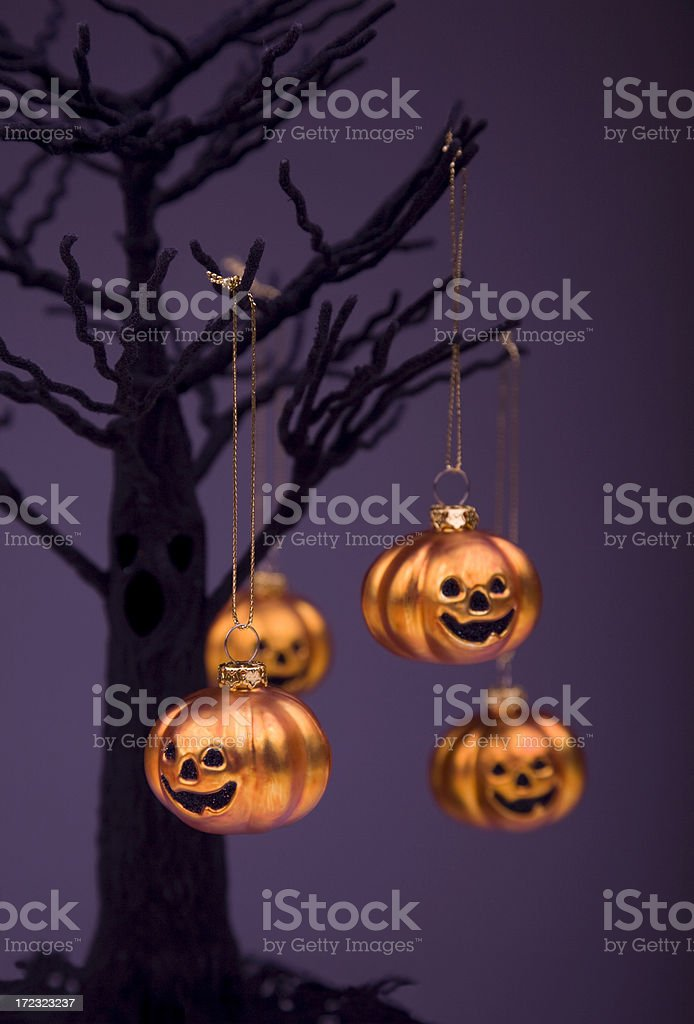 Shiny Happy Pumpkins royalty-free stock photo