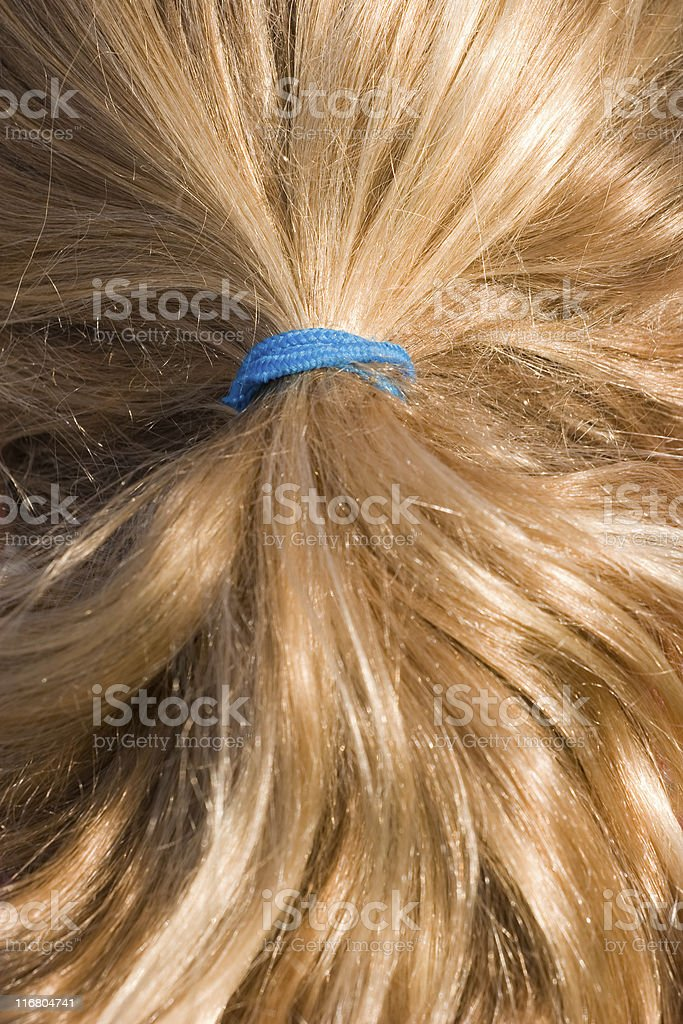 Shiny healthy blond hair, blue elastic ponytail royalty-free stock photo