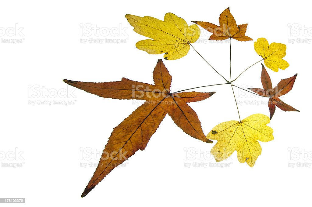 Shiny Maple leave circle in autumn/fall royalty-free stock photo