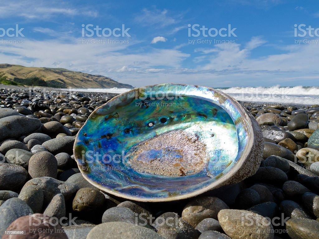 Shiny nacre of Paua shell, Abalone, washed ashore stock photo