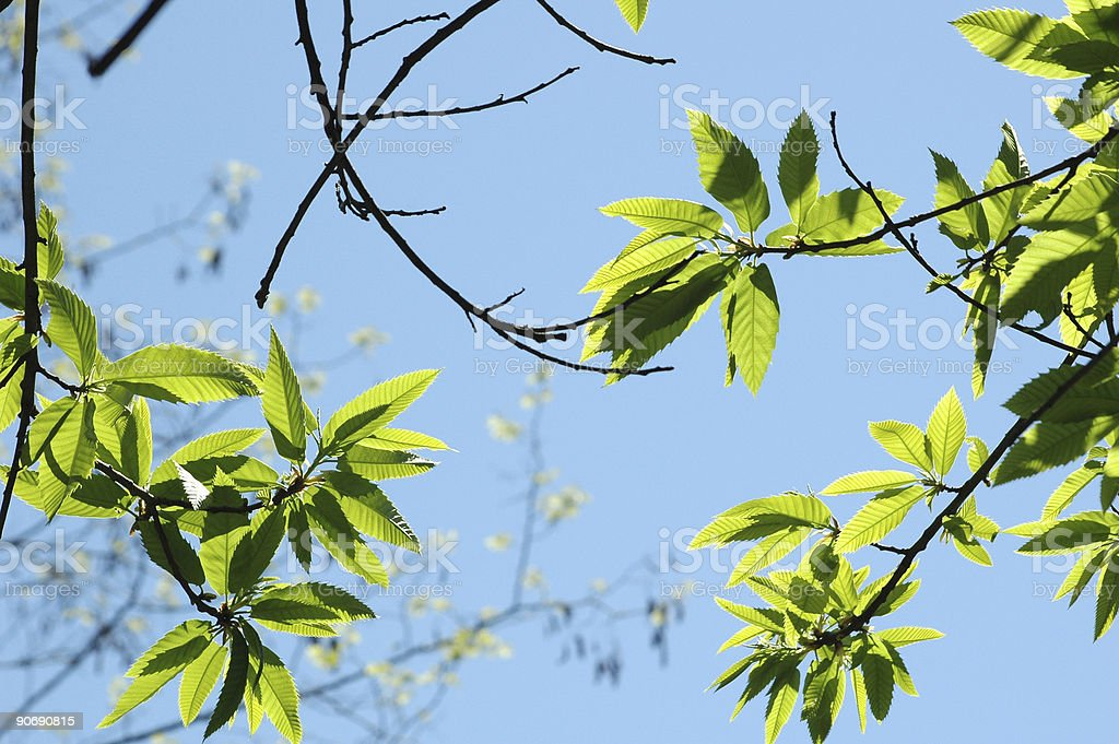 shiny spring leaves royalty-free stock photo