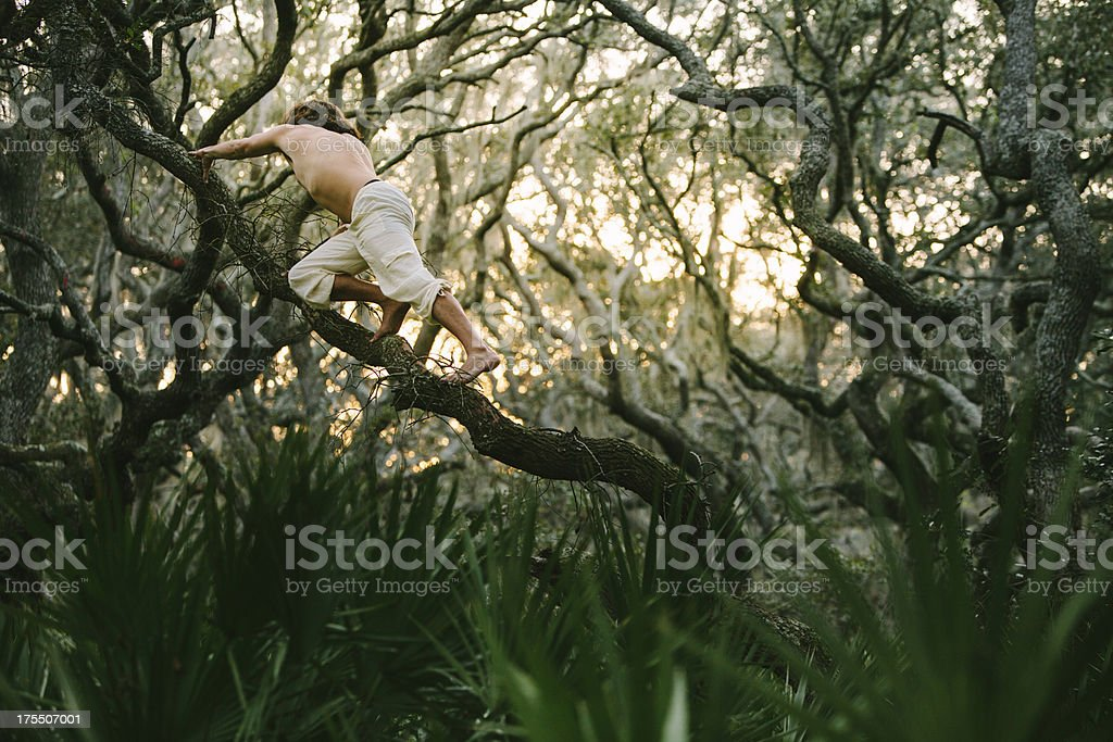 Shirtless man climbs on tree branch at sunset royalty-free stock photo
