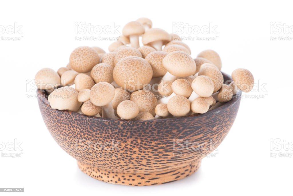 Shitake , Mushrooms food background.  on white background. stock photo