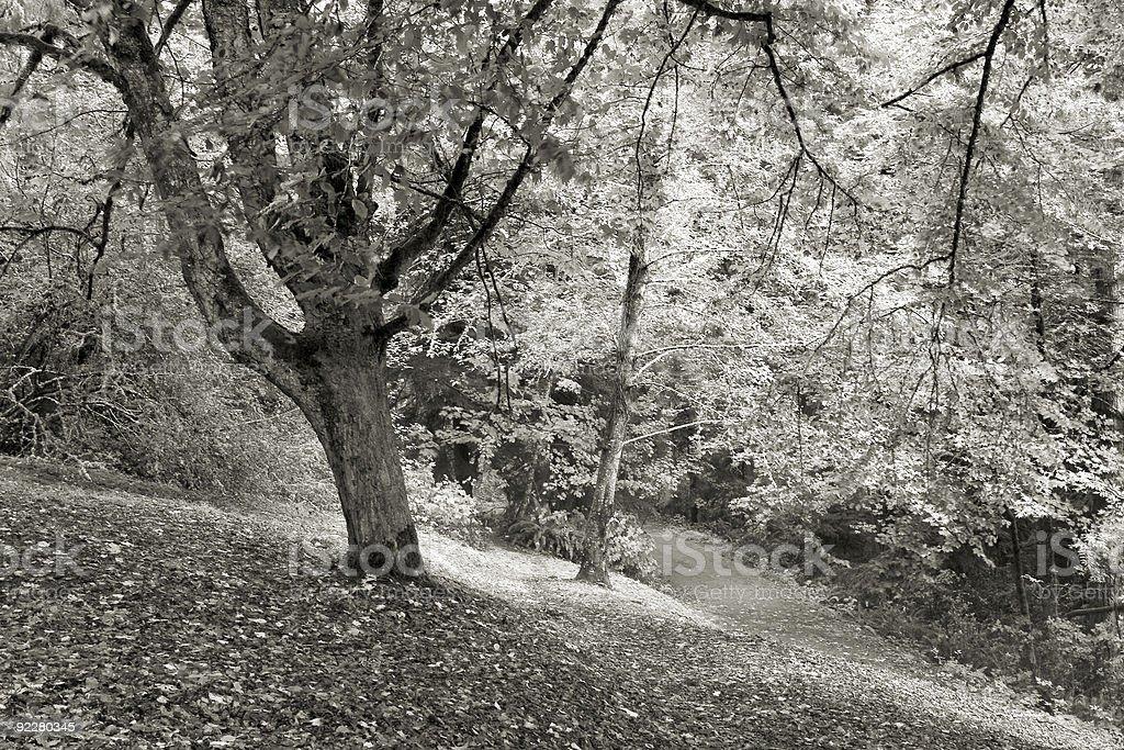 Shively Park, Fall royalty-free stock photo