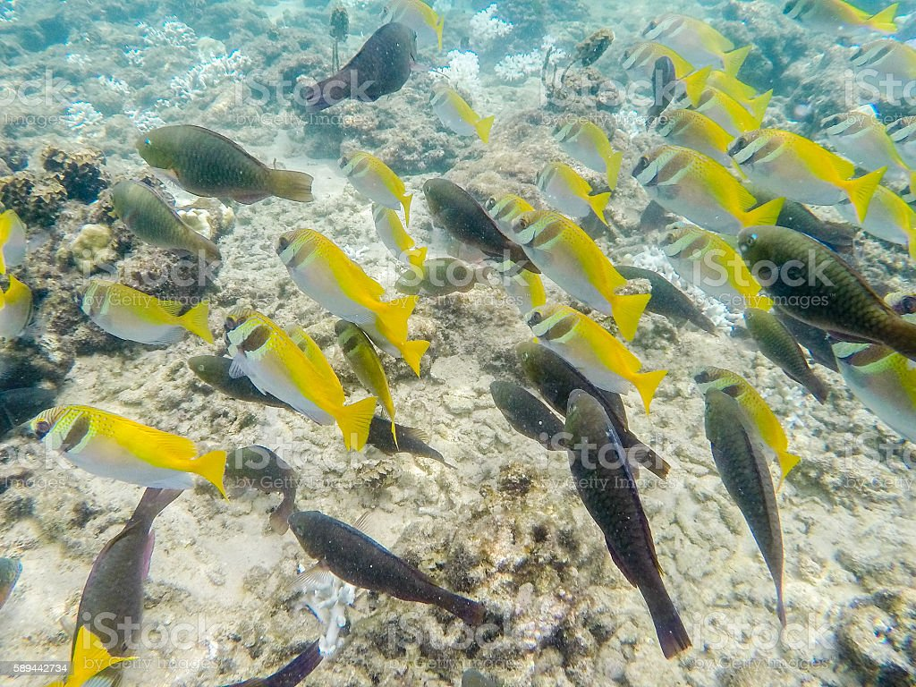 Shoal of black and yellow fish stock photo