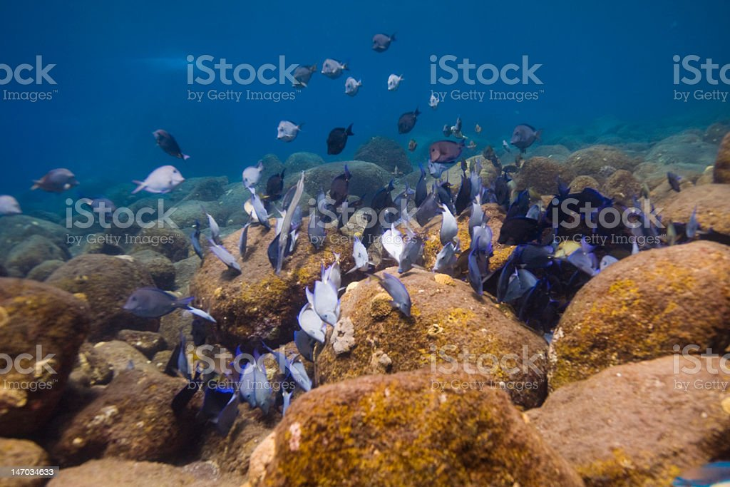 Shoal of fish in the Caribbean sea stock photo