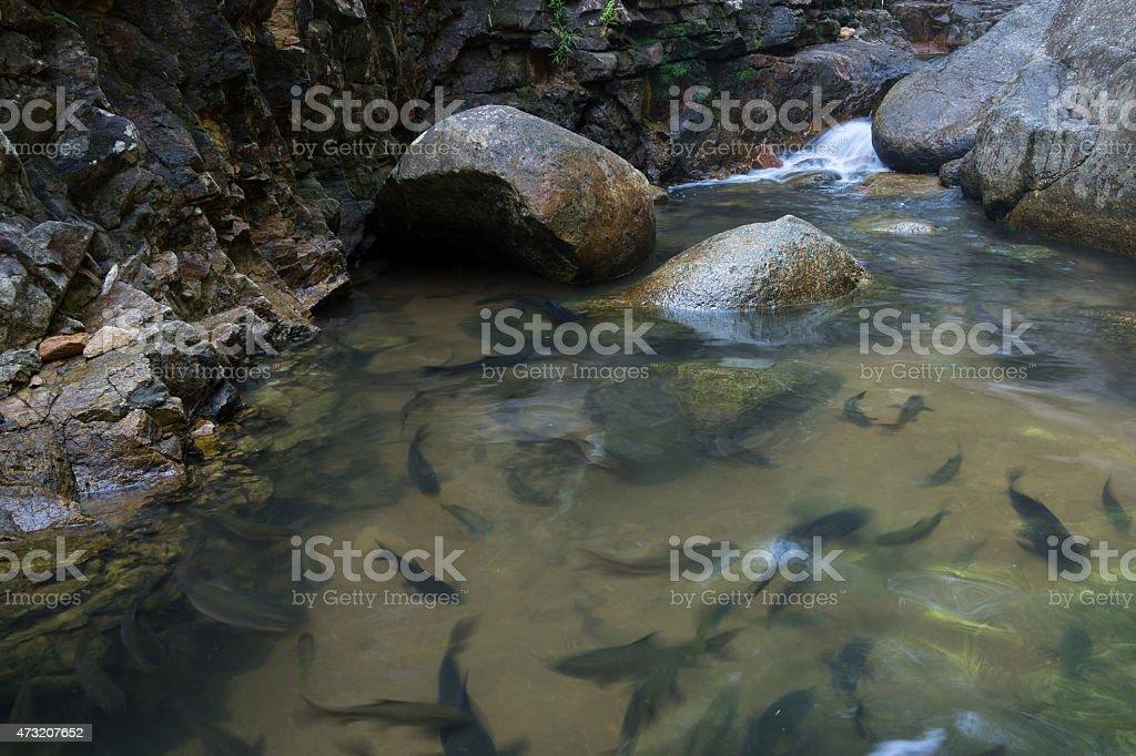 Shoal de poissons nageant dans l'eau claire photo libre de droits
