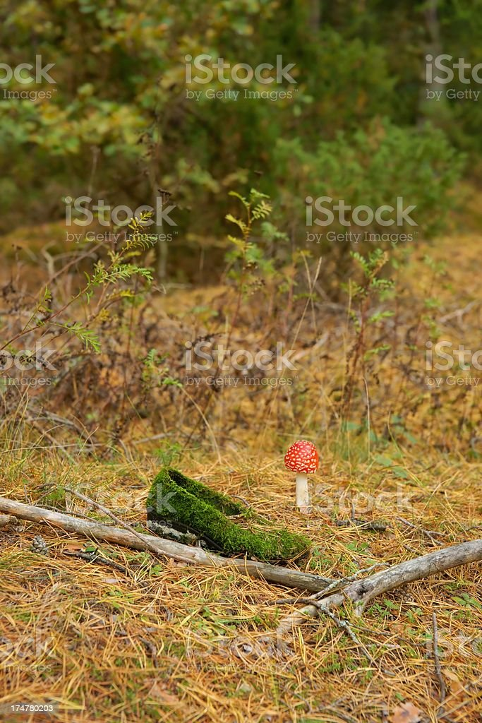Shoe overgrown with moss and Toadstool in the forest. royalty-free stock photo